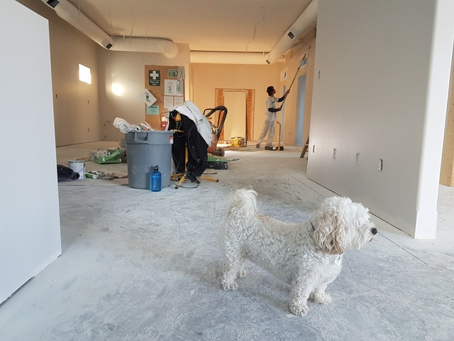 Dog inside fix and flip house remodel